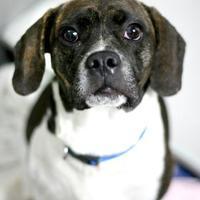 Adopt A Pet :: Bill Walton - Williamsburg, VA
