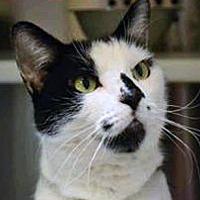 Adopt A Pet :: Dottie - Encino, CA