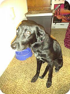 Labrador Retriever Mix Puppy for adoption in Elgin, Texas - Jazmin