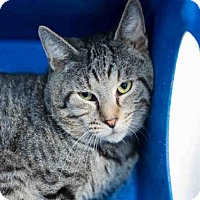 Adopt A Pet :: *APRICOT - Orlando, FL