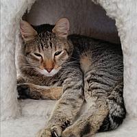 Adopt A Pet :: Jinxy Conrad - Diamond Springs, CA