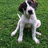 Adopt A Pet :: Watson - Ashburn, VA