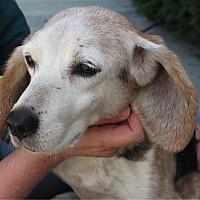 Adopt A Pet :: Smidge Hughes - Waldorf, MD