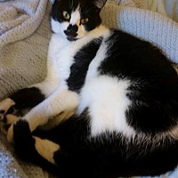 Adopt A Pet :: Bernadette - Jerseyville, IL