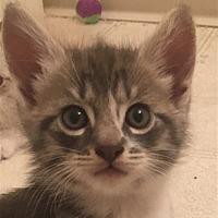 Adopt A Pet :: Edison - Sherwood, OR