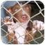 Photo 2 - Border Collie/Australian Kelpie Mix Puppy for adoption in Sacramento, California - I need a home now PLEASSSEEE
