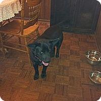 Adopt A Pet :: Louie - Seneca, SC