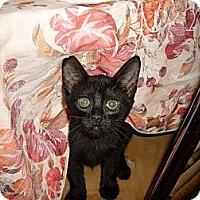 Adopt A Pet :: Phoebe - Kirkwood, DE