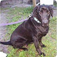 Adopt A Pet :: Lyndie - Altmonte Springs, FL