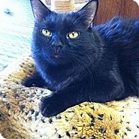 Adopt A Pet :: Boo Boo - Phoenix, AZ