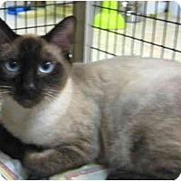 Adopt A Pet :: Wok - Deerfield Beach, FL