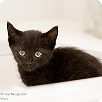 Adopt A Pet :: Gigi - Fountain Hills, AZ