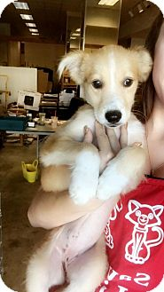 Terrier (Unknown Type, Medium) Mix Puppy for adoption in Chico, California - Maddie