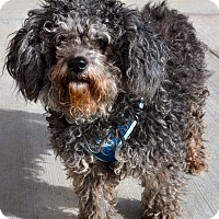 Adopt A Pet :: Dory - Simi Valley, CA