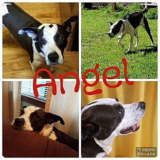 Retriever (Unknown Type) Mix Dog for adoption in Enid, Oklahoma - Angel