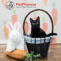 Adopt A Pet :: Baby Olive - Columbus, OH
