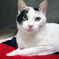 Adopt A Pet :: MacKenzie - Paris, ME