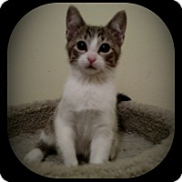Adopt A Pet :: Wobbles - Richmond, VA