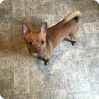 Adopt A Pet :: lil red - Winsted, CT