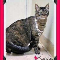 Adopt A Pet :: Korra - Fort Worth, TX