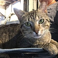 Adopt A Pet :: *Courtesy Post* Ansel - Covington, KY