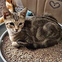 Adopt A Pet :: Apollo - Tampa, FL