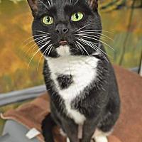 Adopt A Pet :: VEGAS - Toledo, OH