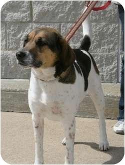 Beagle/Shepherd (Unknown Type) Mix Dog for adoption in Waldorf, Maryland - Emma