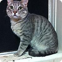 Adopt A Pet :: Casey - Long Beach, CA