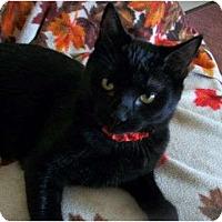 Adopt A Pet :: Bounder - Spencer, NY