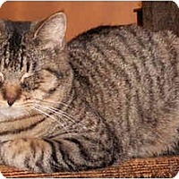 Adopt A Pet :: Timmy - Milford, OH