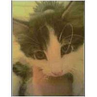 Adopt A Pet :: Oreo - Owasso, OK