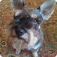 Adopt A Pet :: Watson - Springfield, MO