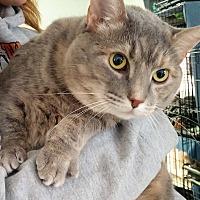 Adopt A Pet :: Jenna - Port Clinton, OH