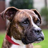 Adopt A Pet :: Kelli - Santa Monica, CA