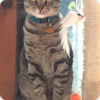 Adopt A Pet :: Peaches - Marietta, GA