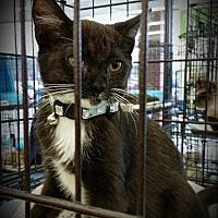 Adopt A Pet :: Salem - Fairborn, OH