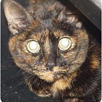 Adopt A Pet :: Gizmo - Watkinsville, GA
