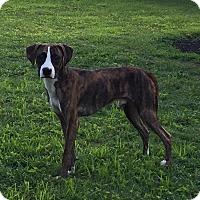 Adopt A Pet :: Snoopy - Normandy, TN