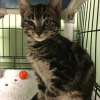 Adopt A Pet :: Salsa - Savannah, TN