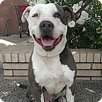 Adopt A Pet :: OSCAR FOSTERED NEEDED!!!! CALL - Encino, CA