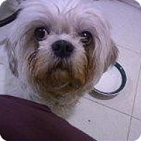 Adopt A Pet :: Meshoo - Alliance, NE
