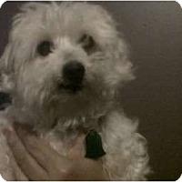 Adopt A Pet :: Dr. Teeth - Madison, WI
