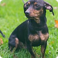 Adopt A Pet :: Zorro - Toronto, ON