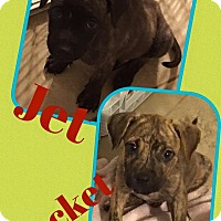 Adopt A Pet :: Rocket - Scottsdale, AZ