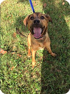 St. Bernard/Australian Shepherd Mix Dog for adoption in kennebunkport, Maine - Jazzy - in Maine