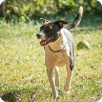 Border Collie/Hound (Unknown Type) Mix Puppy for adoption in Athens, Georgia - Tasha