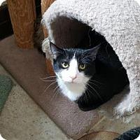 Adopt A Pet :: Riker - Pittsburgh, PA