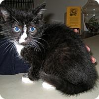 Adopt A Pet :: Selene - Jefferson, NC