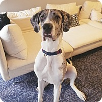 Adopt A Pet :: Indy - Stevens Point, WI